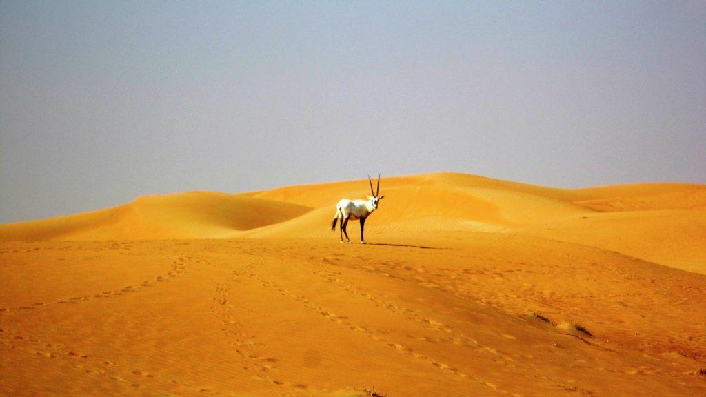 viaggi a dubai negli emirati
