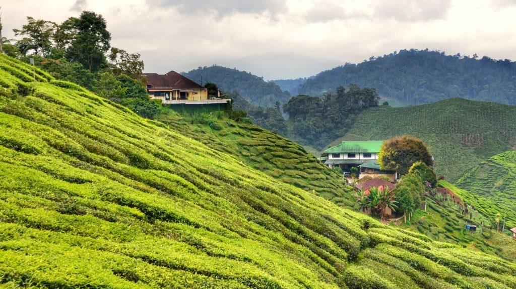 highlands della malesia